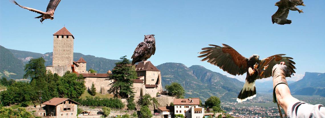 Gufyland: Centro di Recupero Avifauna Castel Tirolo